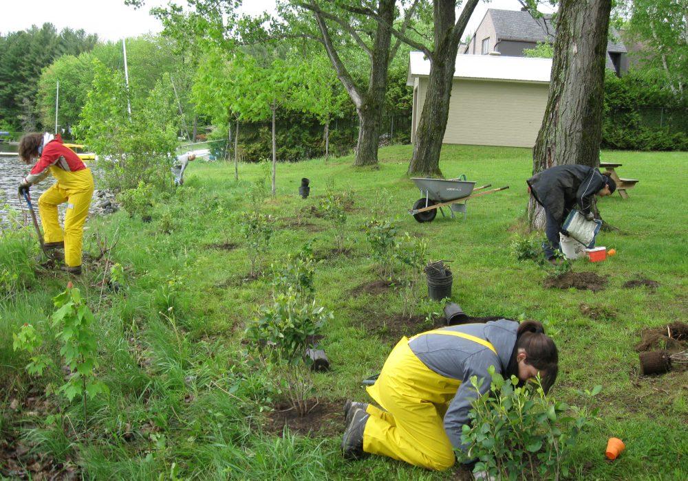 Plantation après la pluie