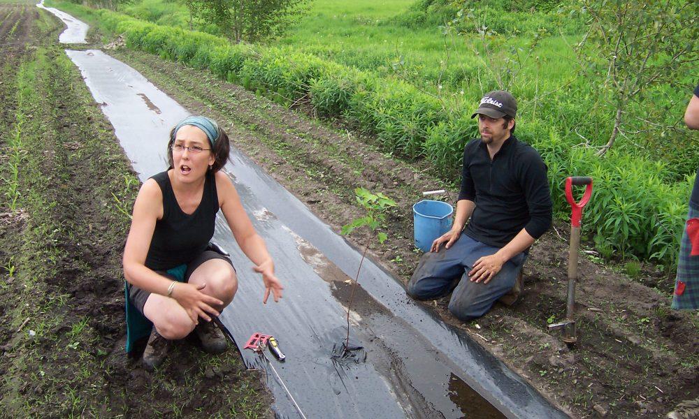 La pose de la lisière de plastique pour donner une chance aux nouvelles plantes de bien pousser