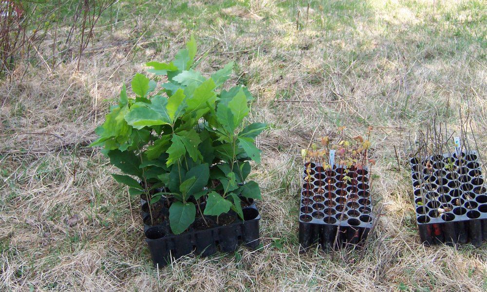 Plantes en multi-cellule
