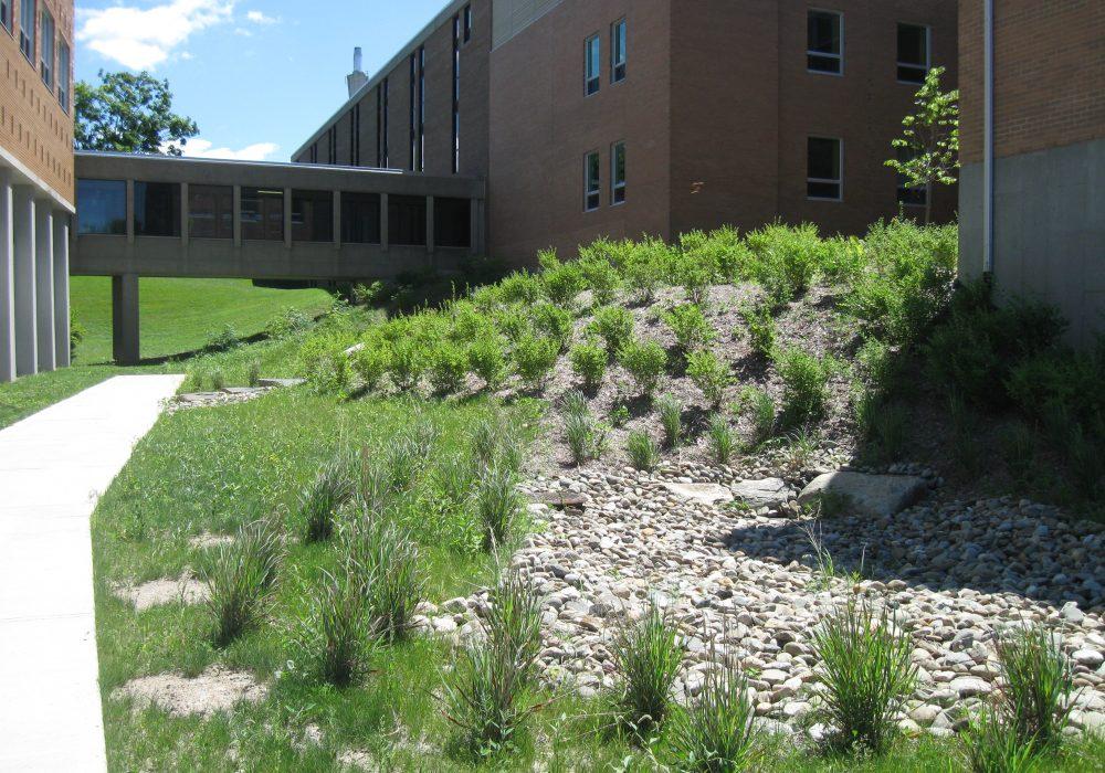 Plantation à l'université de Sherbrooke