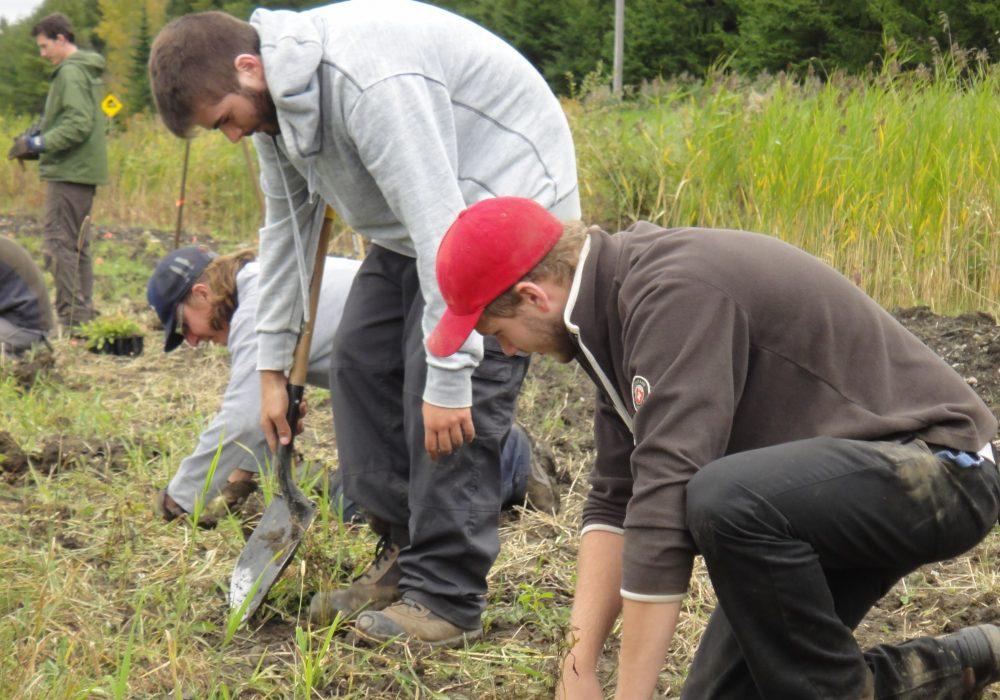 Plantation avec des étudiants en bioécologie à la ferme Croque Saison