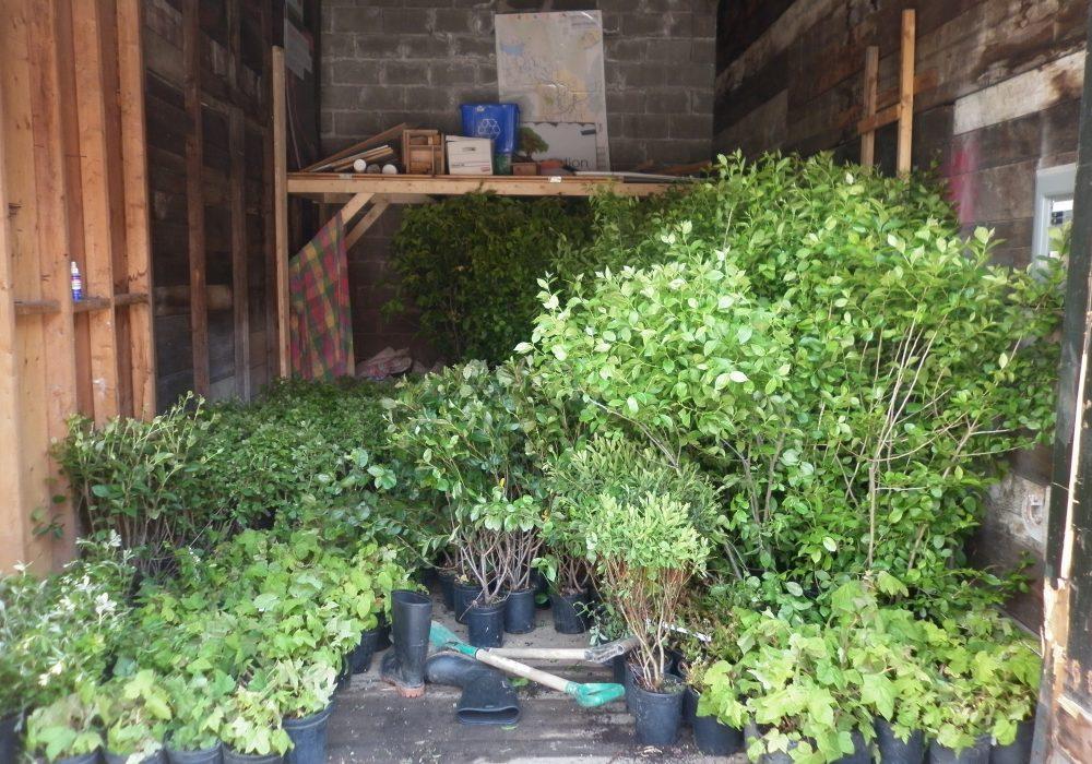 Plantes dans le garage prêtes à être transportées