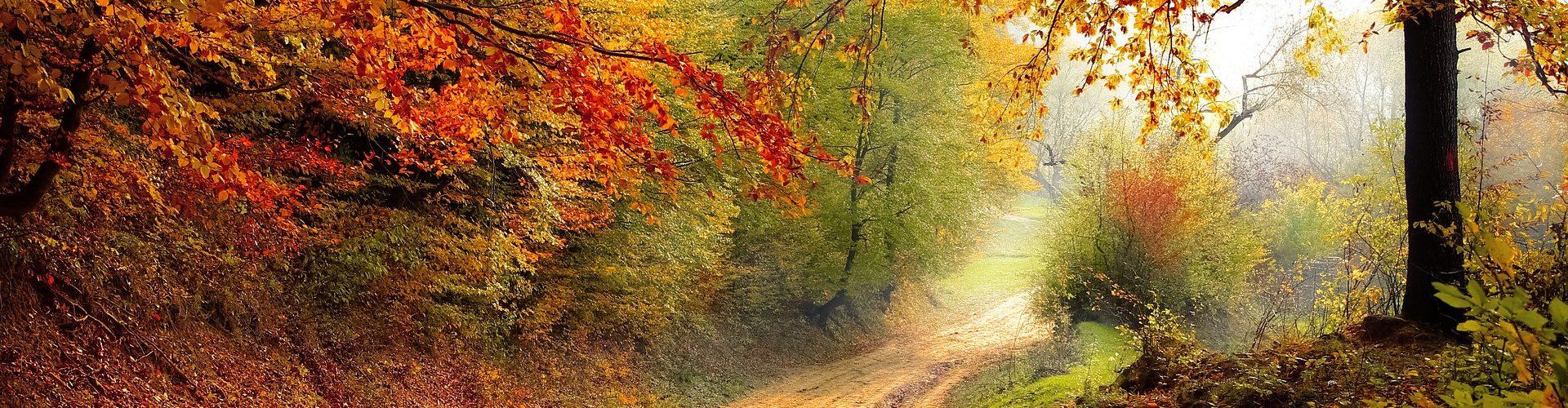 road-1072823_1920