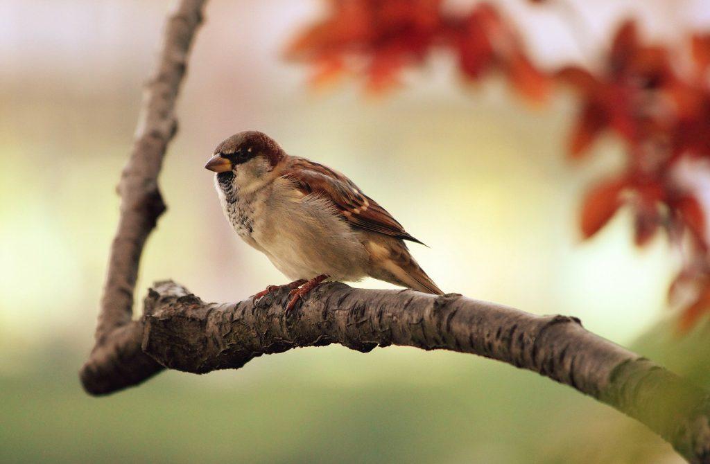 sparrow-9950_1920