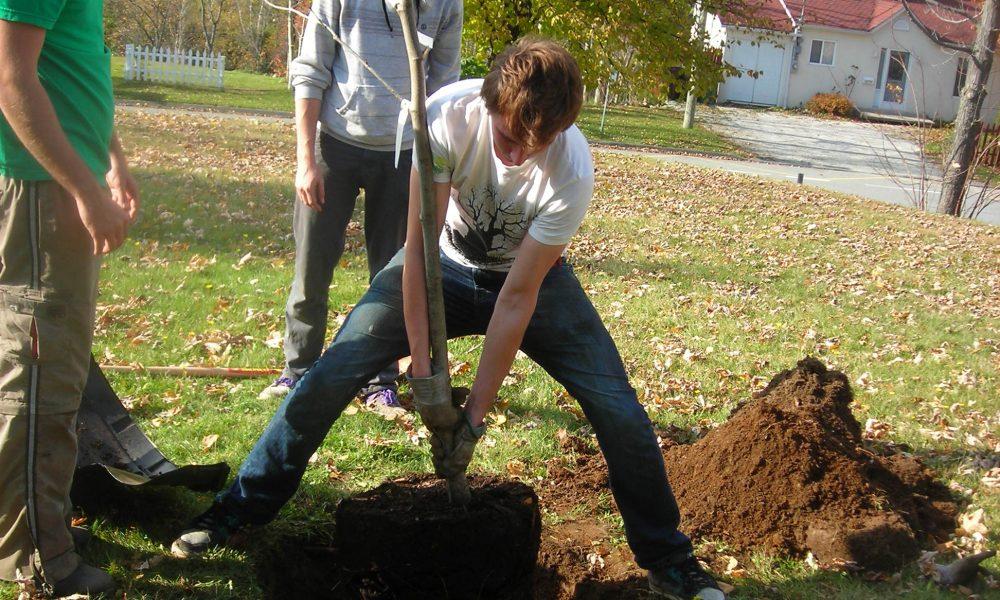 Étudiants qui plante un arbre